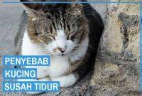 Kucing Saya Kalau Malam Susah Tidur, Bagaimana Mengatasinya ?