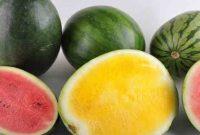 Jenis-Jenis Semangka